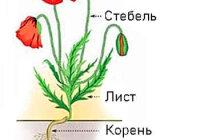 Какие части есть у растения?