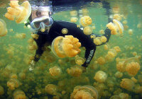 От чего зависит распределение организмов в поверхностном слое вод?