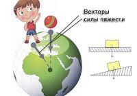 Приведите примеры векторных величин известных вам из курса физики