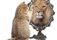 Влияет ли самооценка на поведение человека?