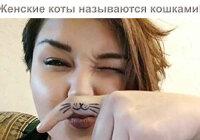 Приколы про кошек (смешные фото с анекдотами)