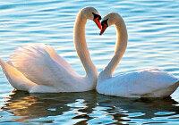 У водоплавающих птиц перья и пух остаются сухими, какое явление здесь наблюдается?
