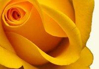 Что означает желтый цвет в психологии? Значение.