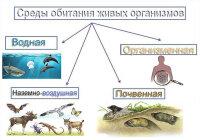 Какие среды обитания живых организмов вы знаете?