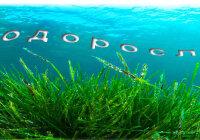 Каково значение водорослей в природе и в жизни человека?
