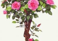 Роза комнатная, домашняя. Уход за цветами.