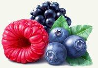 Съедобные лесные растения со съедобными плодами