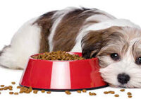 Как накормить собаку, если она отказывается от еды?
