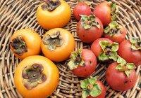 Хурма, выращивание в домашних условиях. Условия для выращивания хурмы.