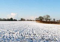 Почему глубокий рыхлый снег предохраняет озимые хлеба от вымерзания?