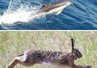 Скорость зайца равна 15 м/с, а скорость дельфина 72 км/ч. Кто из них имеет большую скорость?