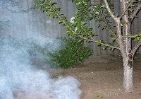 Зачем весной в холодные ясные ночи в садах разводят костры, дающие много дыма?