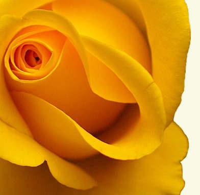 Желтый цвет в психологии.