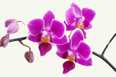 Орхидея уход в домашних условиях.