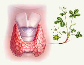 Лекарство для щитовидной железы
