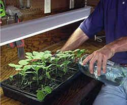 Посев баклажан