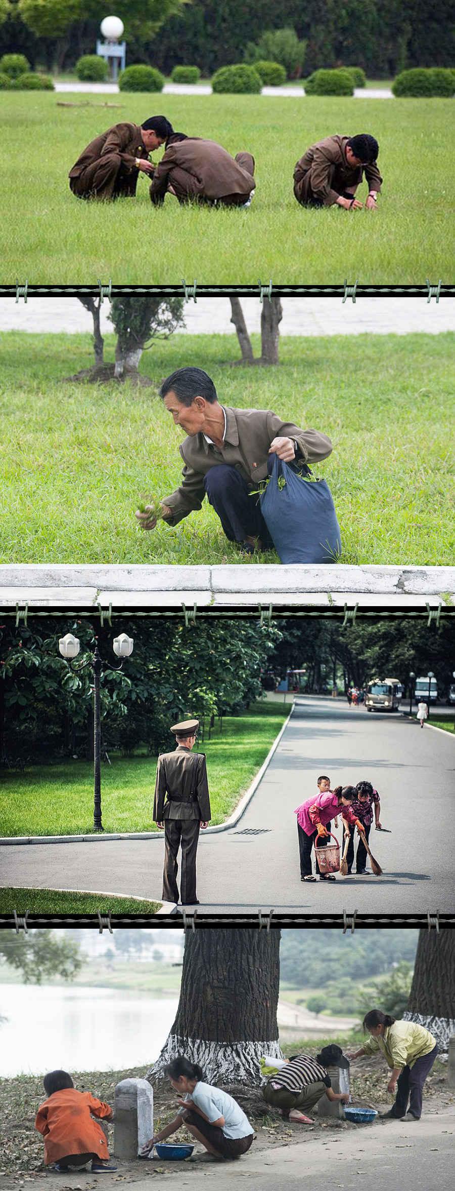 Военные в КНДР рвут траву