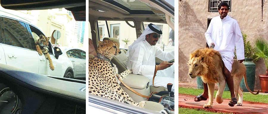 Звери на улицах Дубая