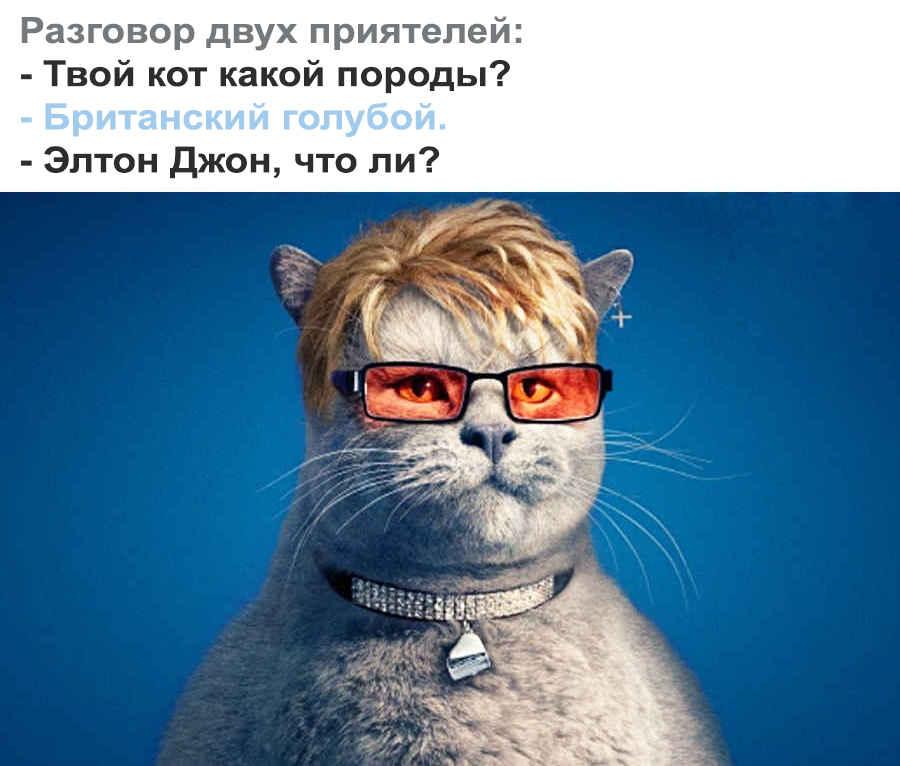 Цитаты про британского кота