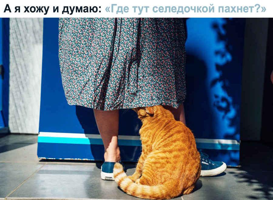 Любимые запахи кота в доме