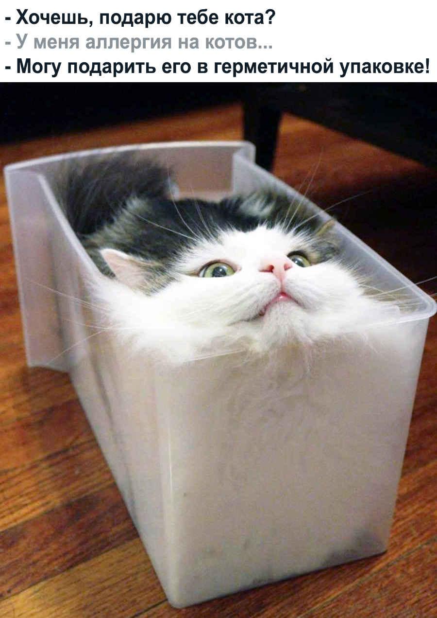 Герметичный домик для котика