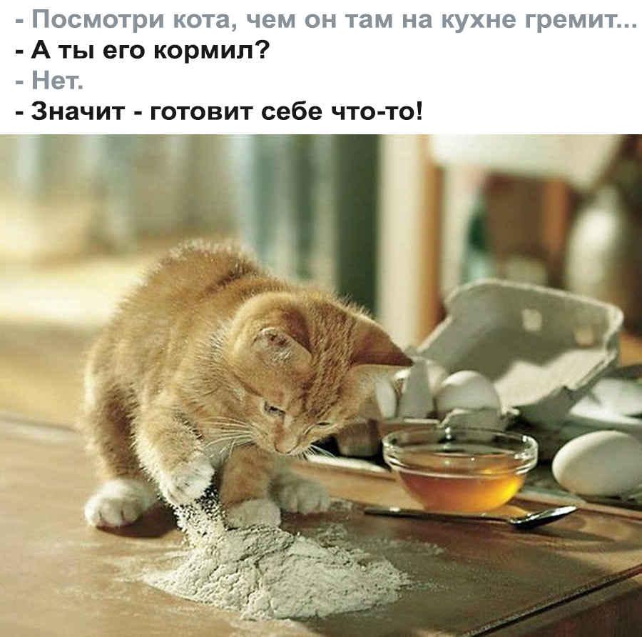 Фото кулинарного котенка