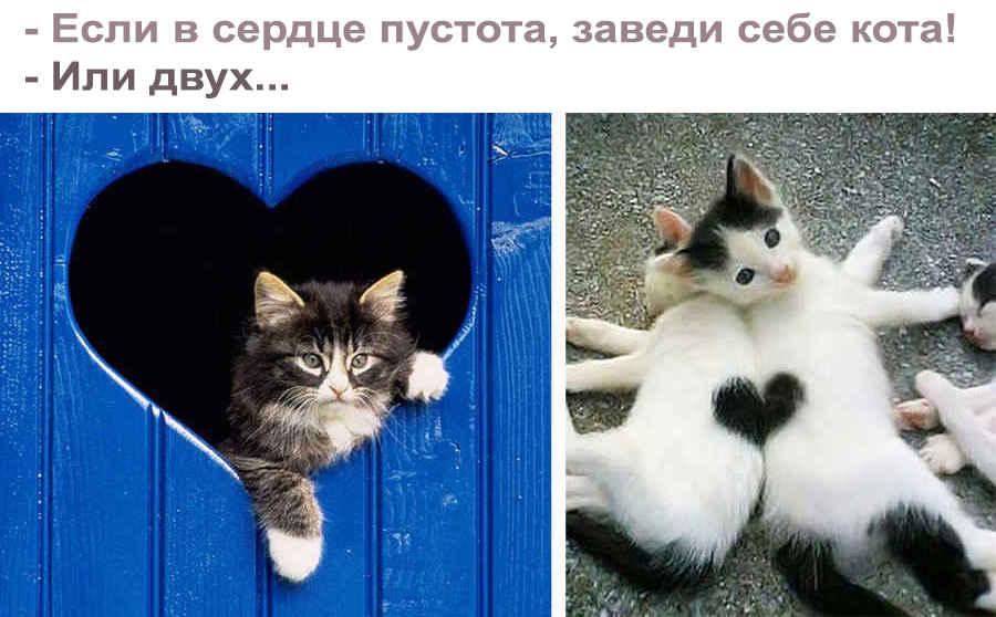 Прикольная фраза про кота