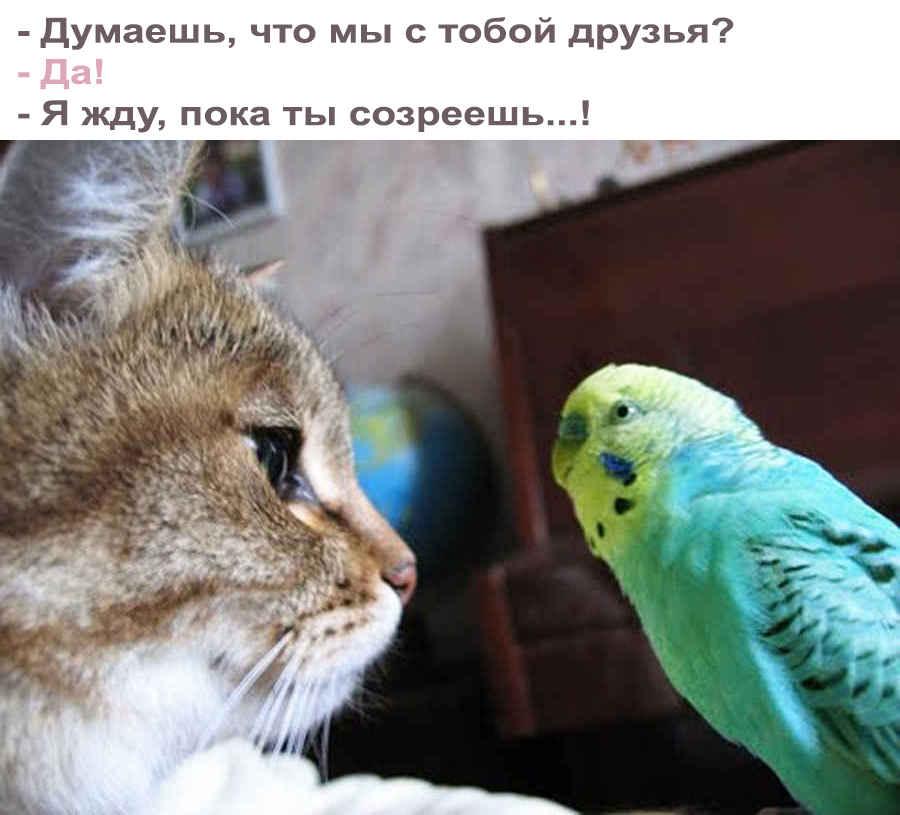 Анекдот про кота и попугая
