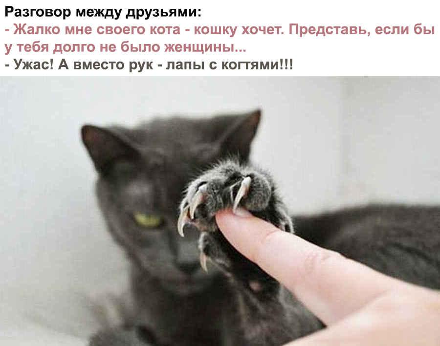 Кот хочет кошку