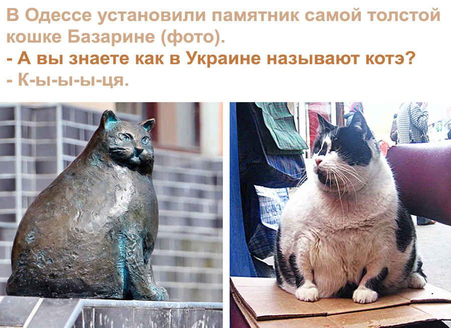 Приколы Одесских кошечек
