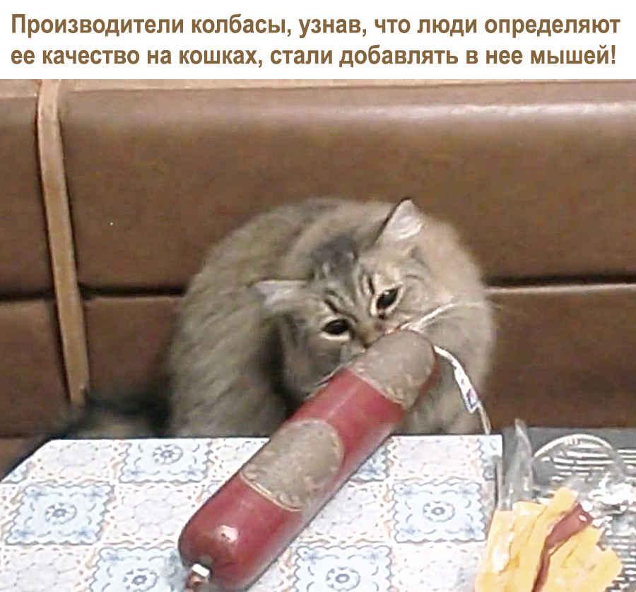 Анекдотик про кошку и колбасу