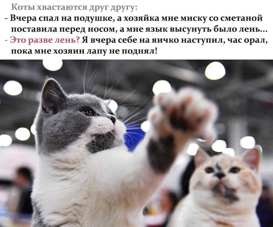 Анекдот про двух ленивых котов