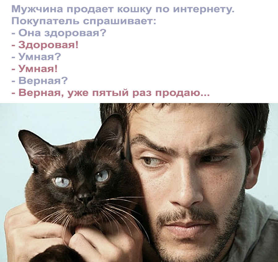 Анекдот на фото про прикольную кошечку