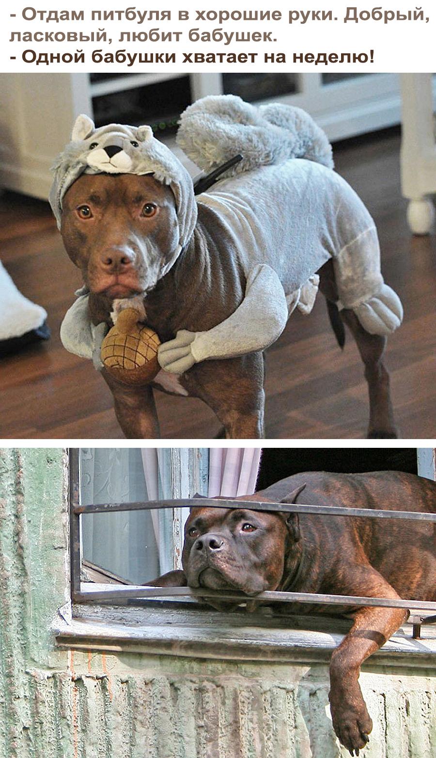 Бабушкин пес