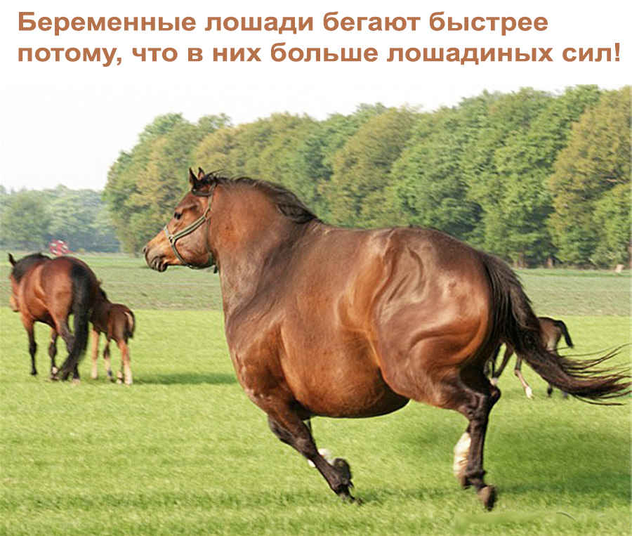 Беременная лошадь на скаку