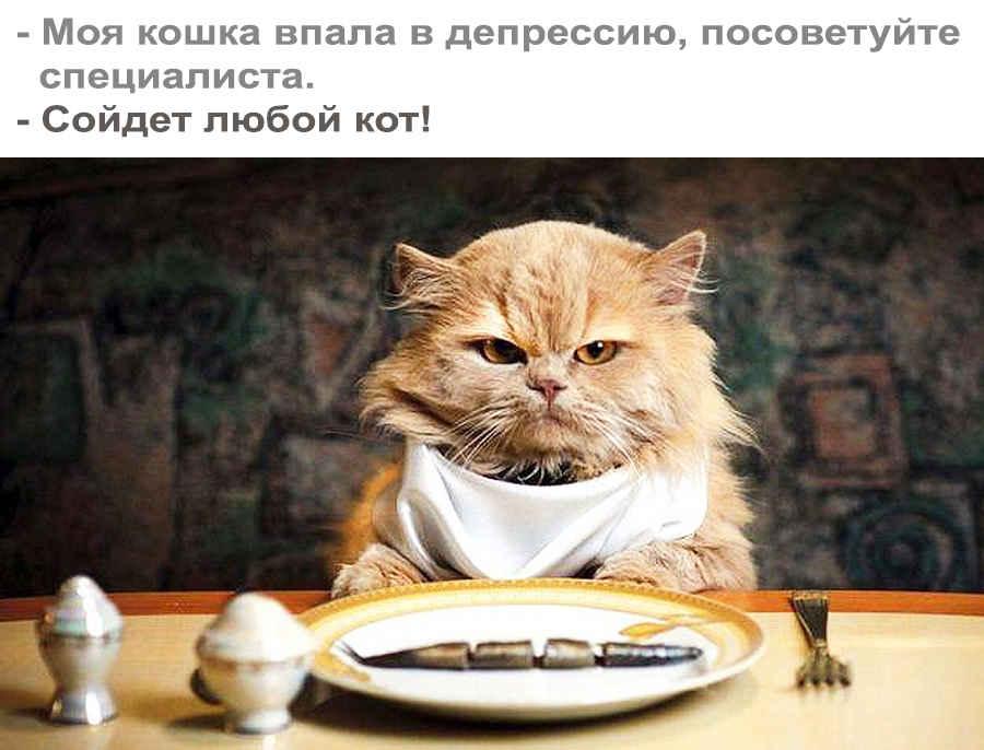 Кошка в депрессии