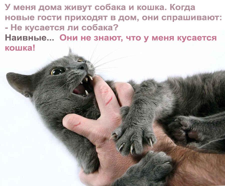 Фотография кусачей кошки