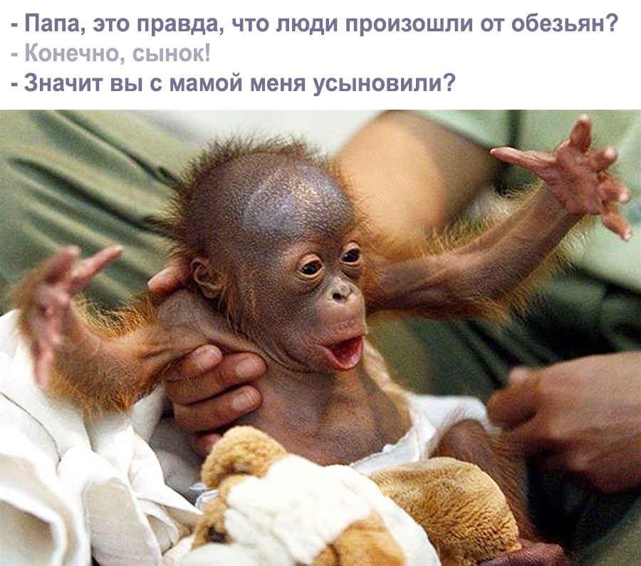 Фото прикольной обезьянки