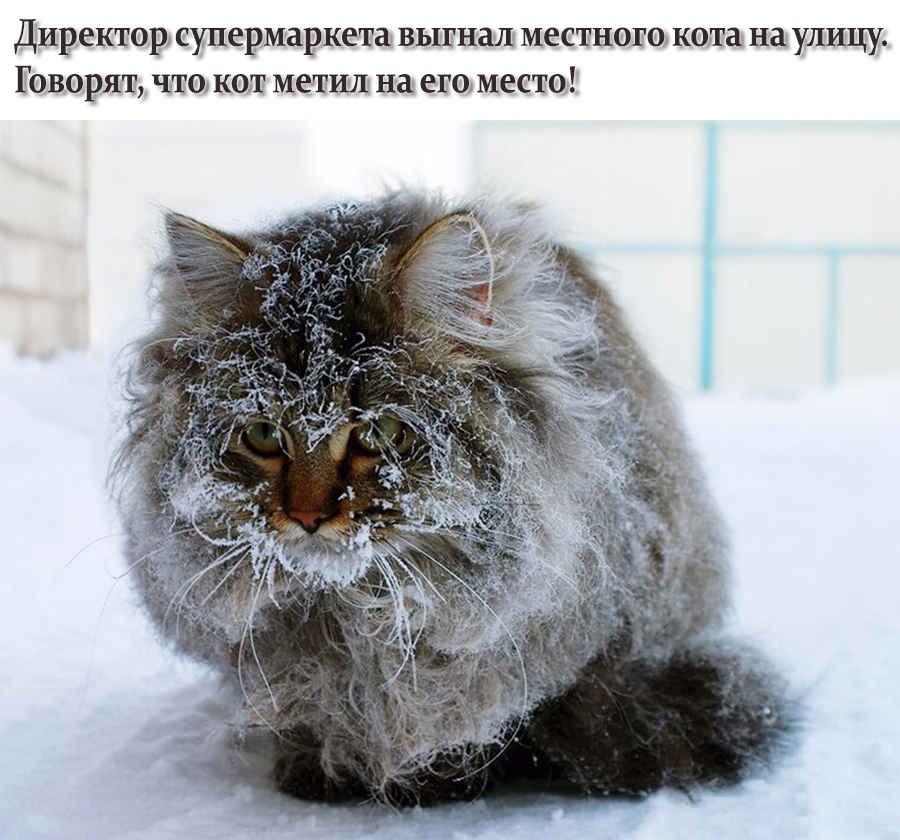 Фото замерзающего на улице котика зимой