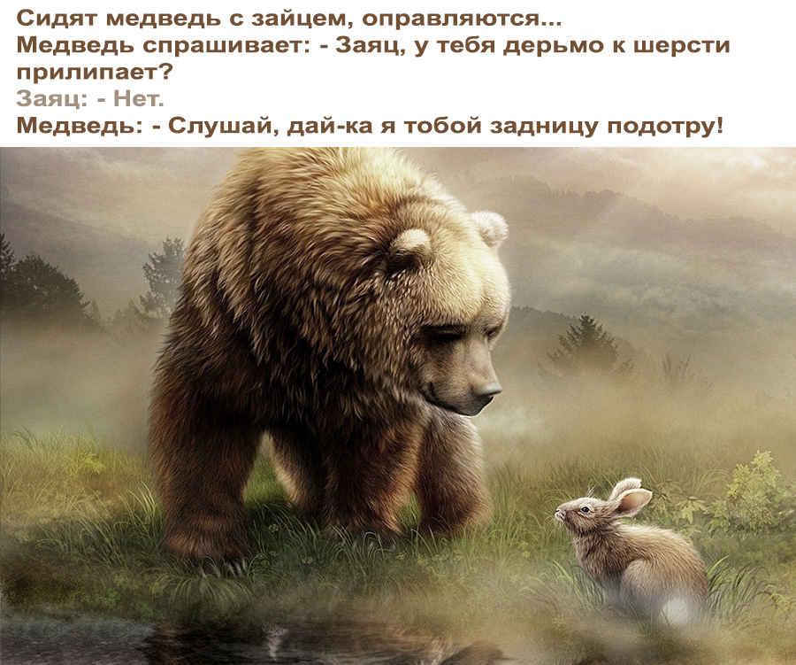 Хитрый ход медведя