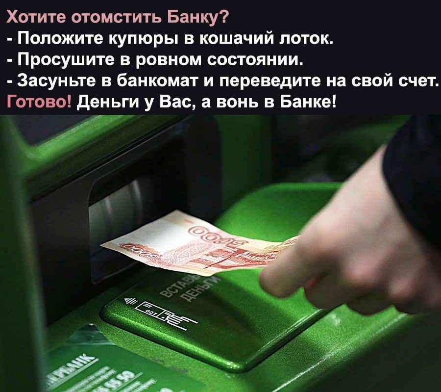 Кошачий прикол для Банка