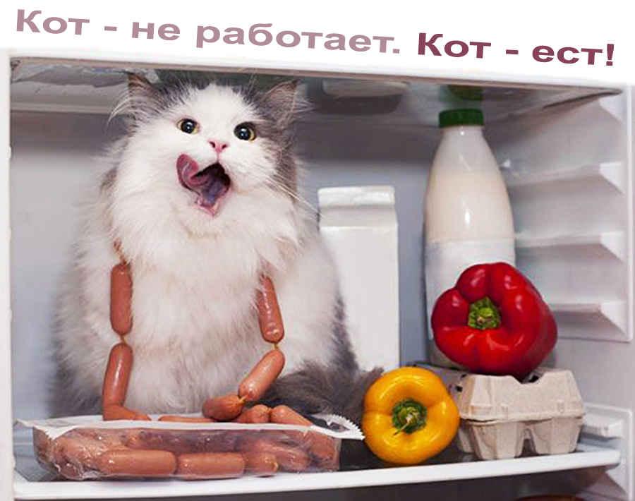 Безработный кот