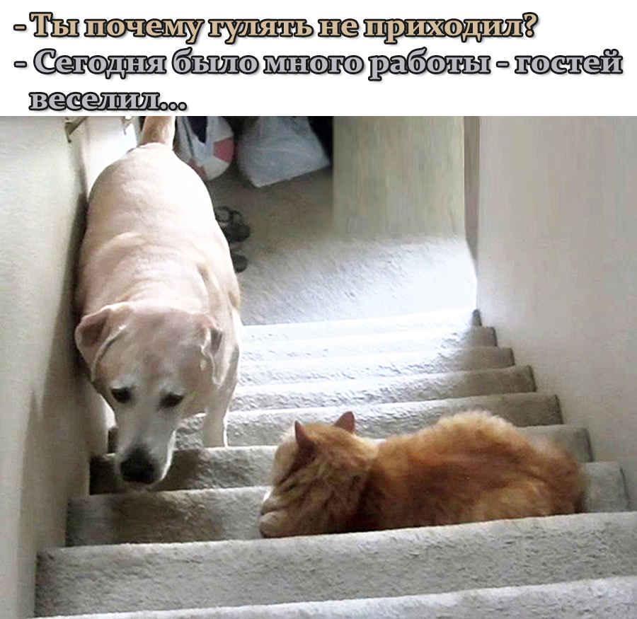 Кот дружит с собакой