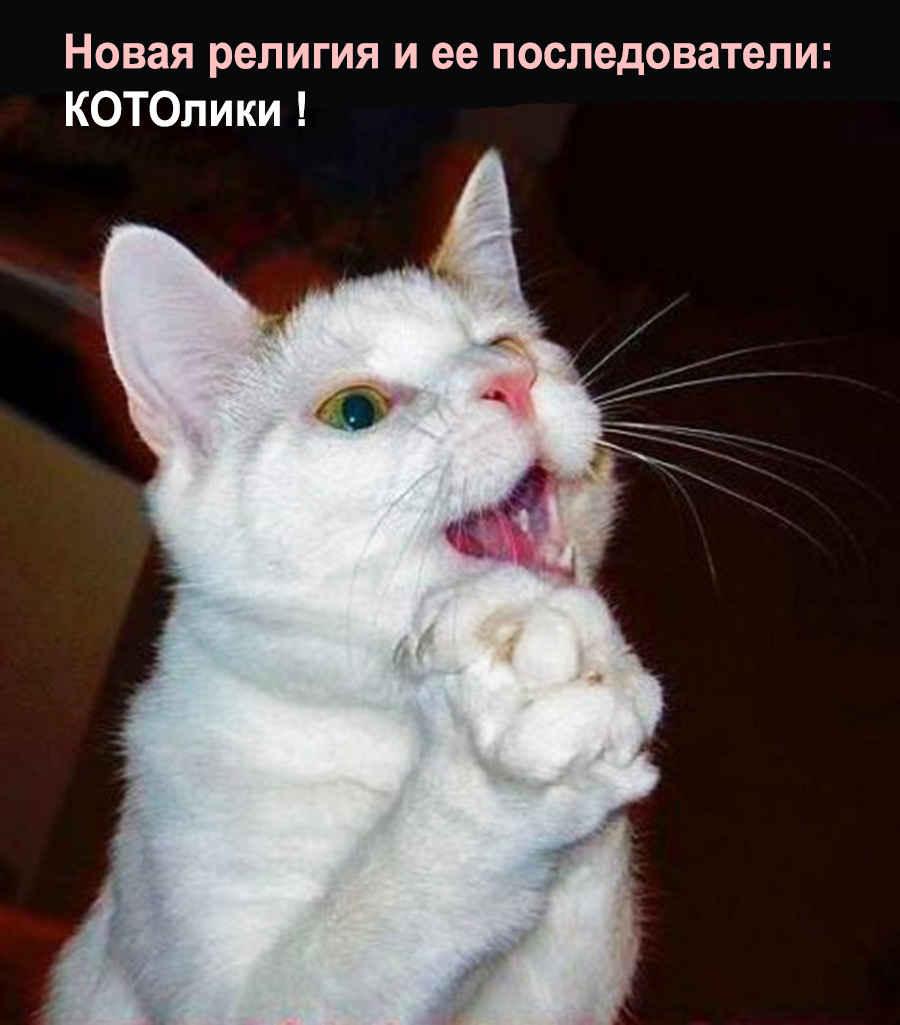 Кот КОТОлик