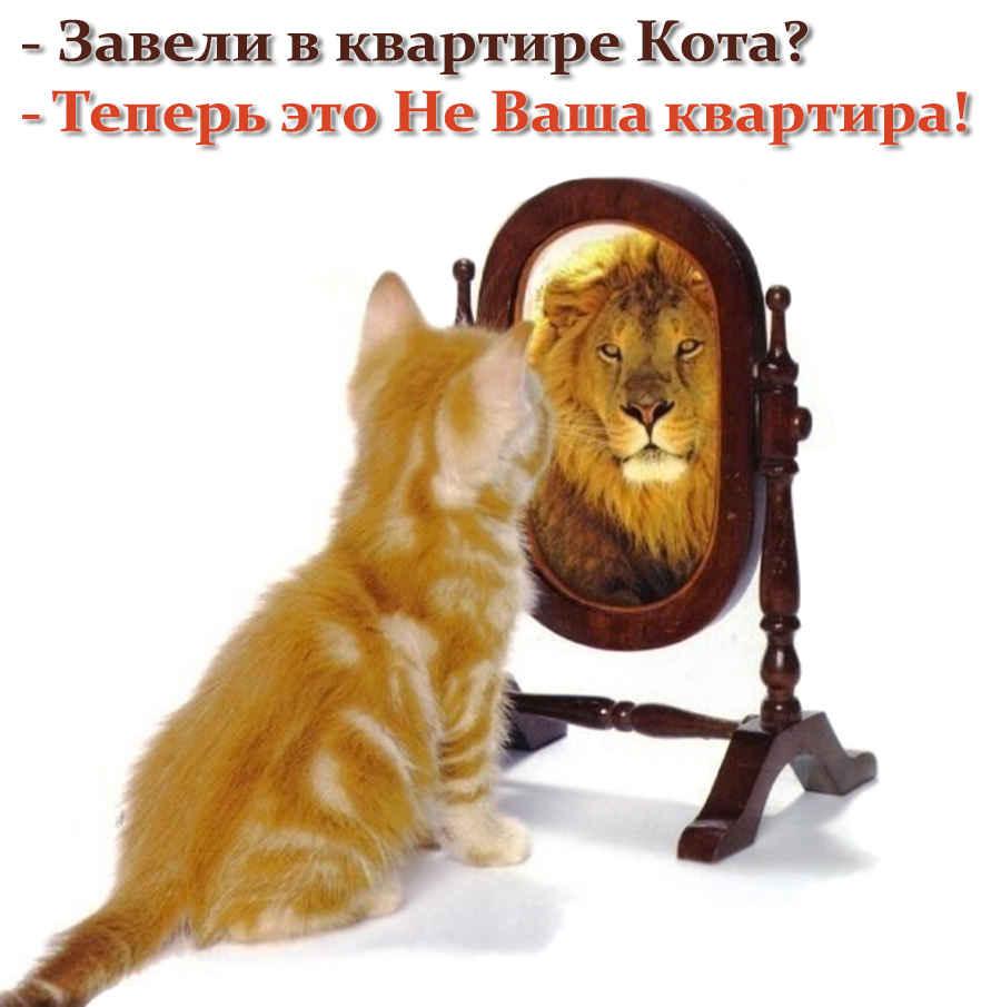 Кот в доме хозяин и лев