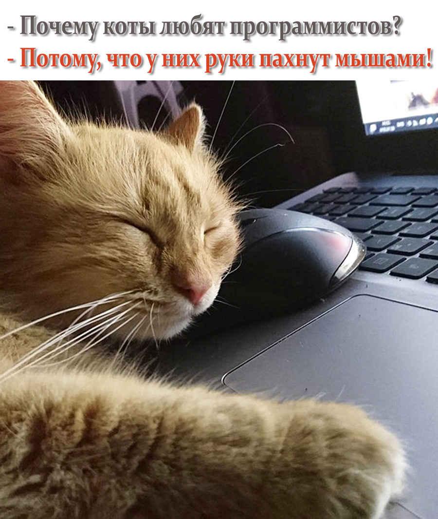 Фото котика программиста