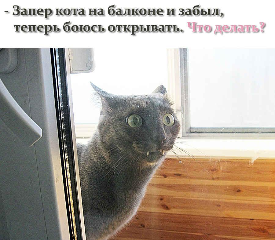 Котик рассердился