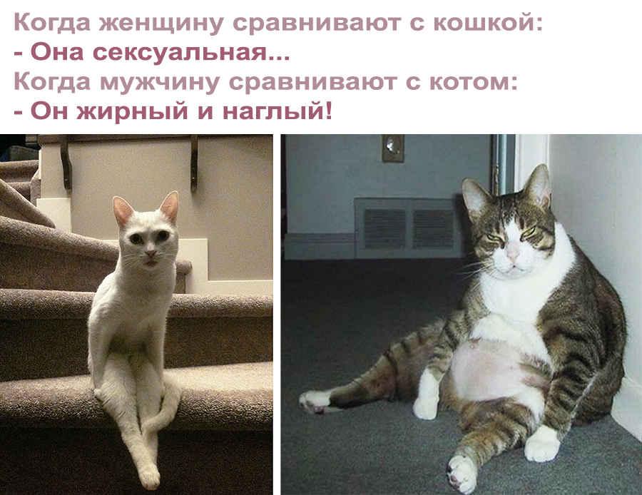 Красивая кошечка и жирный кот