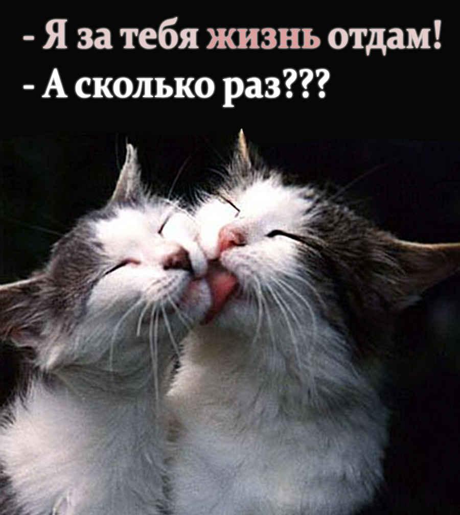 Любовь между котом и кошкой