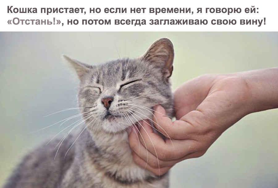 Милое домашнее животное